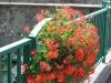 ranspach-fleuri-7